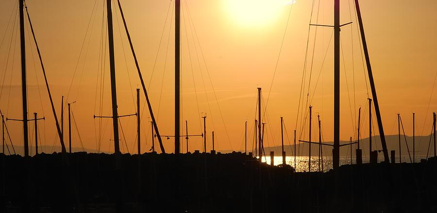 Sailing Photograph - Naked Masts by Steven Milner