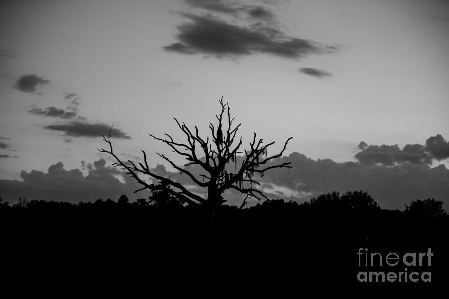 Naked Tree Photograph - Naked Tree by Mina Isaac