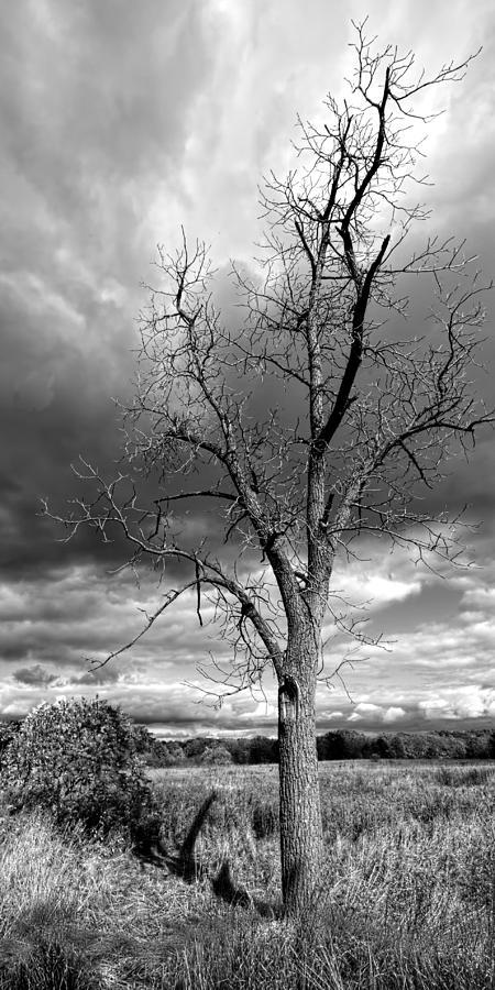 Tree Photograph - Naked Tree by Roger Swieringa