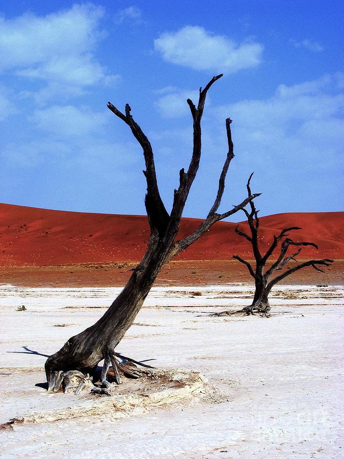 Trees Photograph - Namib Naukluft by Noa Yerushalmi