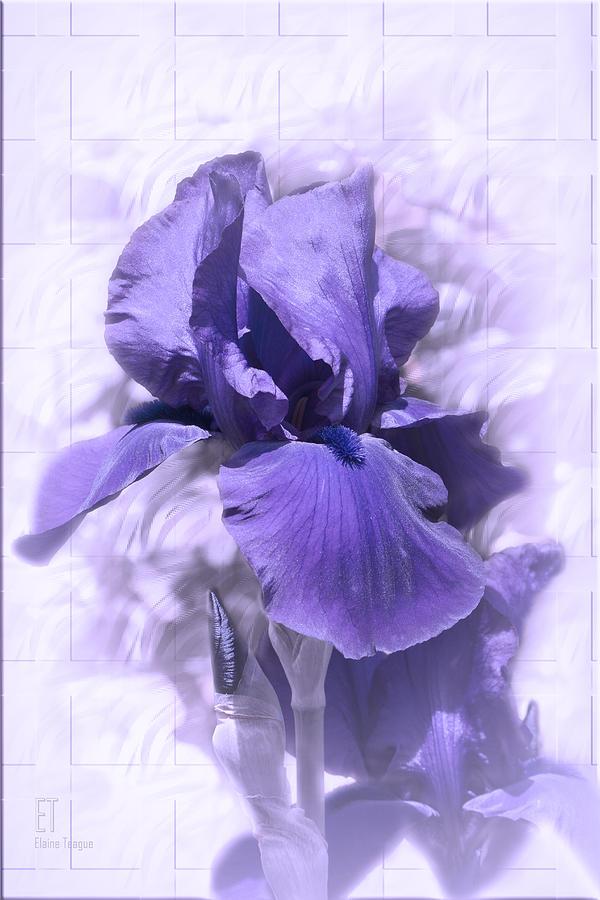 Flower Photograph - Nancy by Elaine Teague