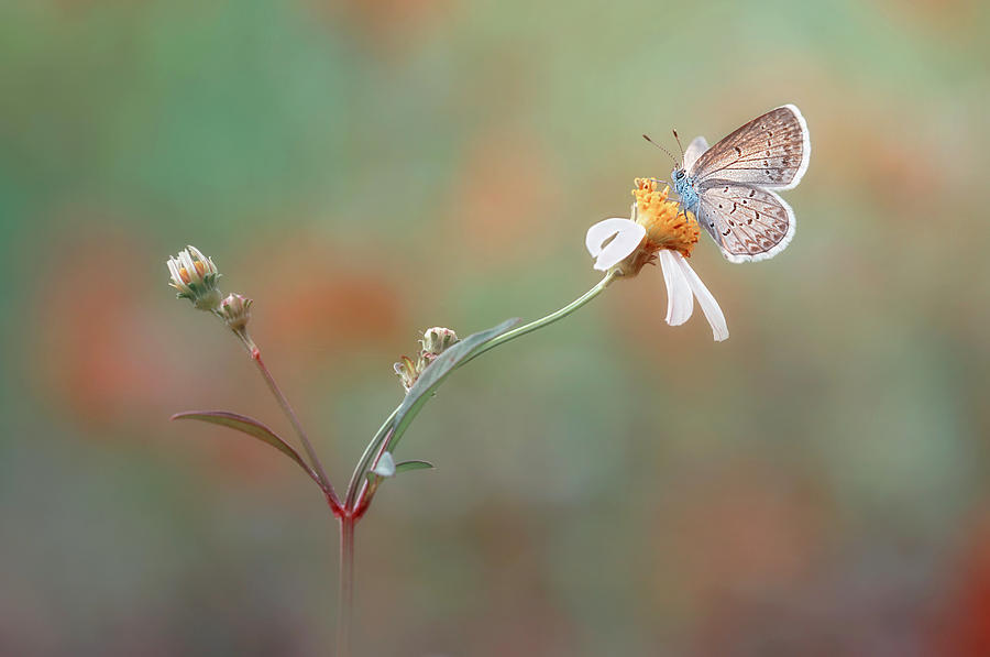 Butterfly Photograph - Nangkring Indah by Adi Isna Maulana