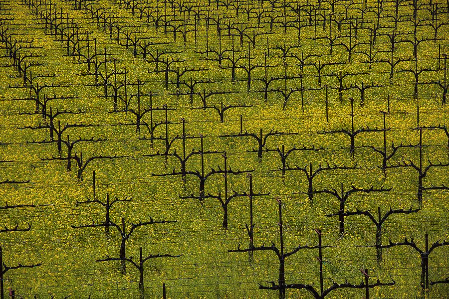 Napa Photograph - Napa Mustard Grass by Garry Gay