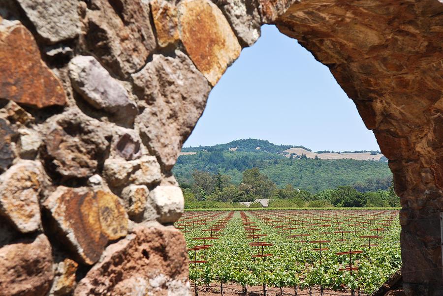 Napa Vineyard Photograph - Napa Vineyard by Shane Kelly
