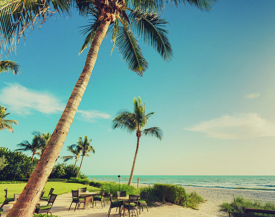 Naple Beach Palms Photograph by Thepalmer