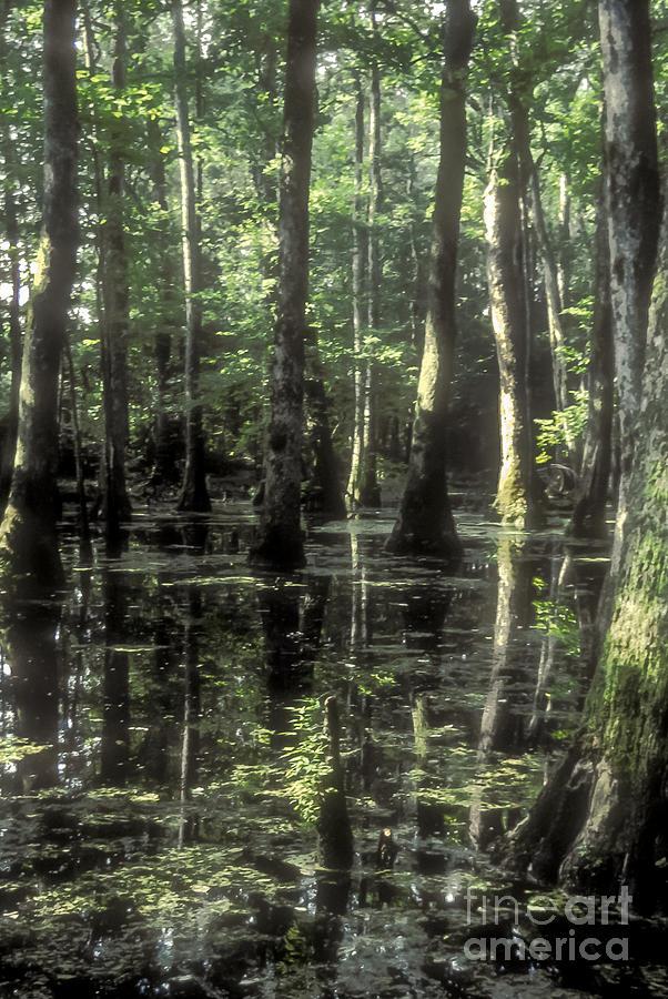 Natchez Trace Cypress Photograph by Bob Phillips