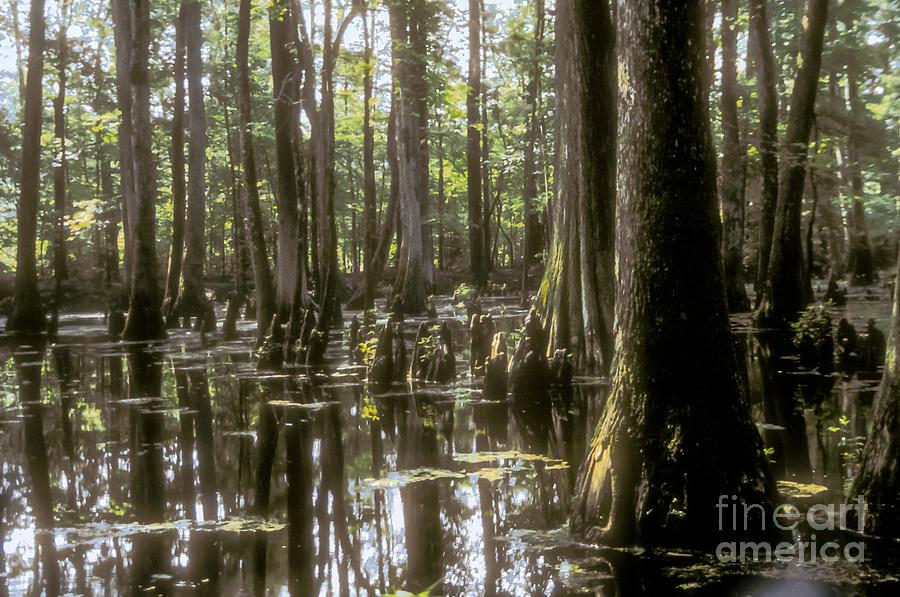 Natchez Trace Wetlands Photograph by Bob Phillips