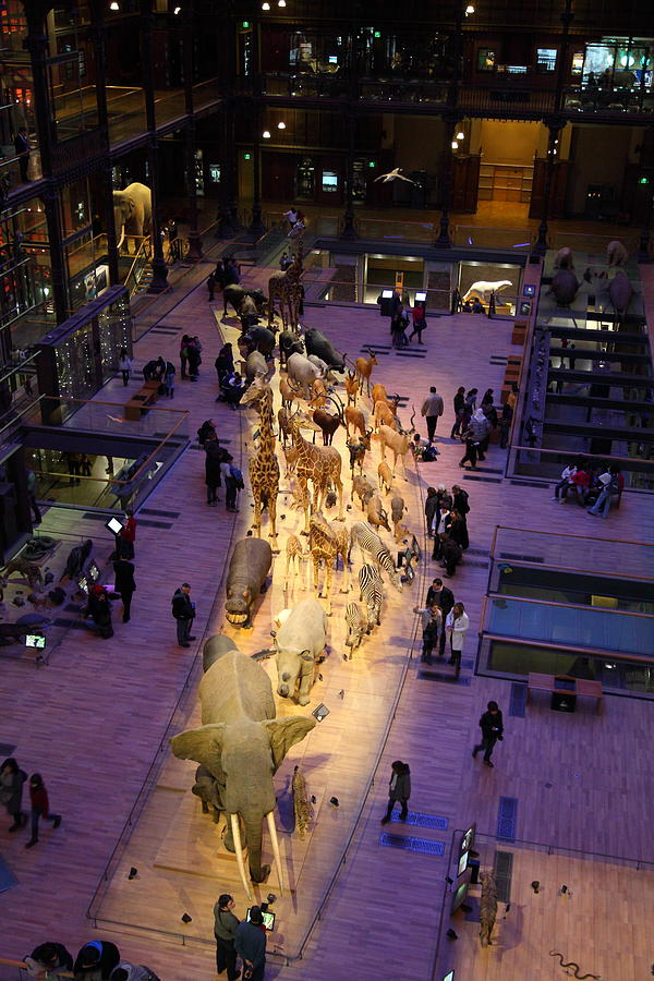Paris Photograph - National Museum Of Natural History - Paris France - 011353 by DC Photographer