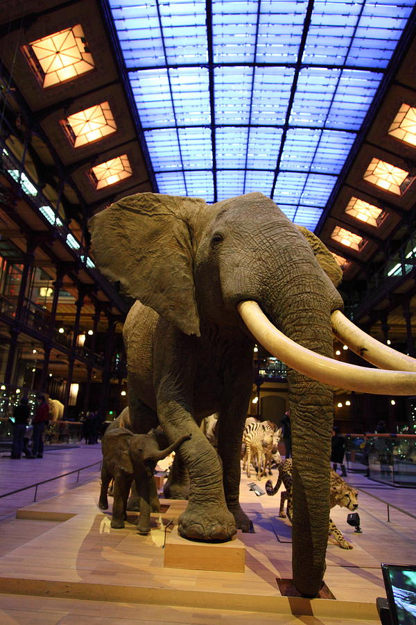 Paris Photograph - National Museum Of Natural History - Paris France - 011383 by DC Photographer