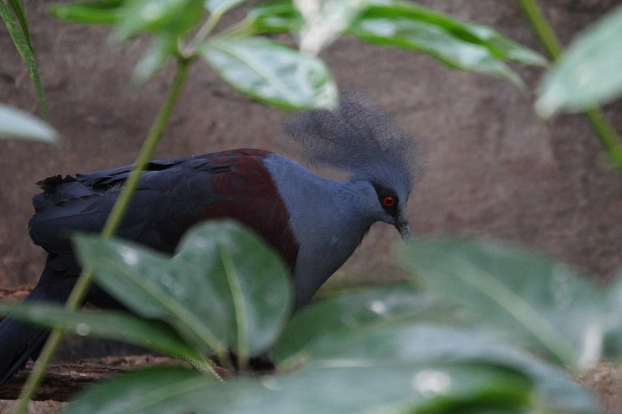 National Photograph - National Zoo - Birds - 011329 by DC Photographer