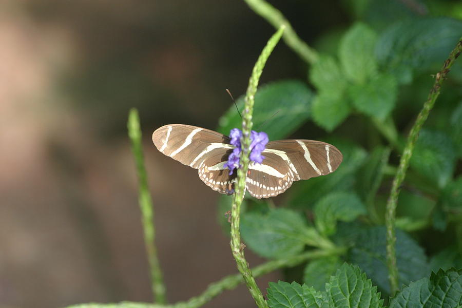 National Photograph - National Zoo - Butterfly - 12122 by DC Photographer