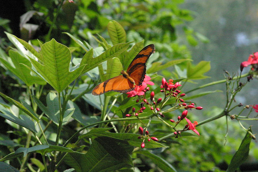 National Photograph - National Zoo - Butterfly - 12126 by DC Photographer