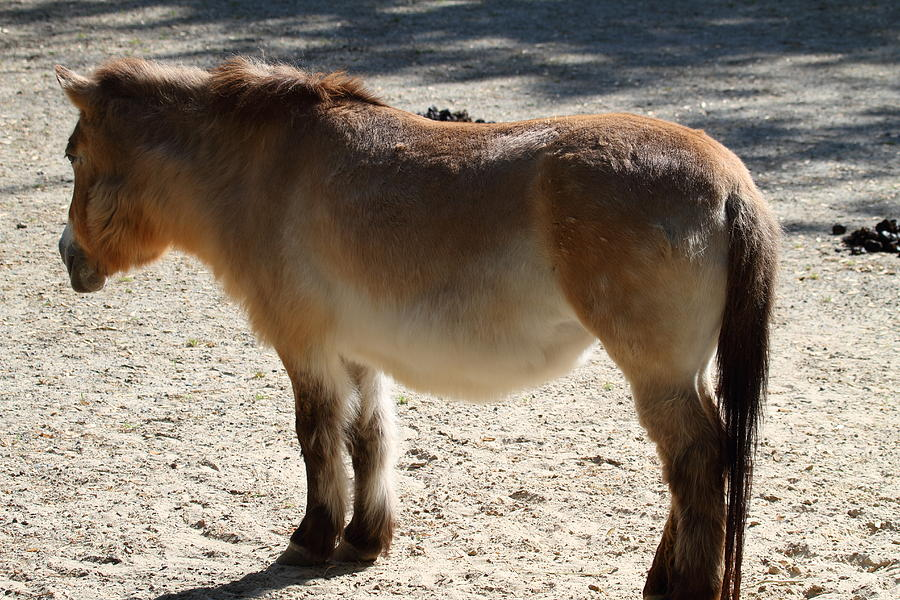 National Photograph - National Zoo - Donkey - 01134 by DC Photographer
