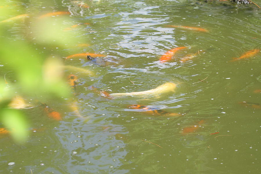 National Photograph - National Zoo - Fish - 011316 by DC Photographer