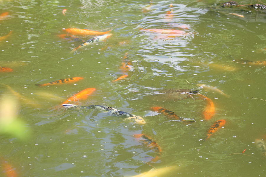 National Photograph - National Zoo - Fish - 011317 by DC Photographer