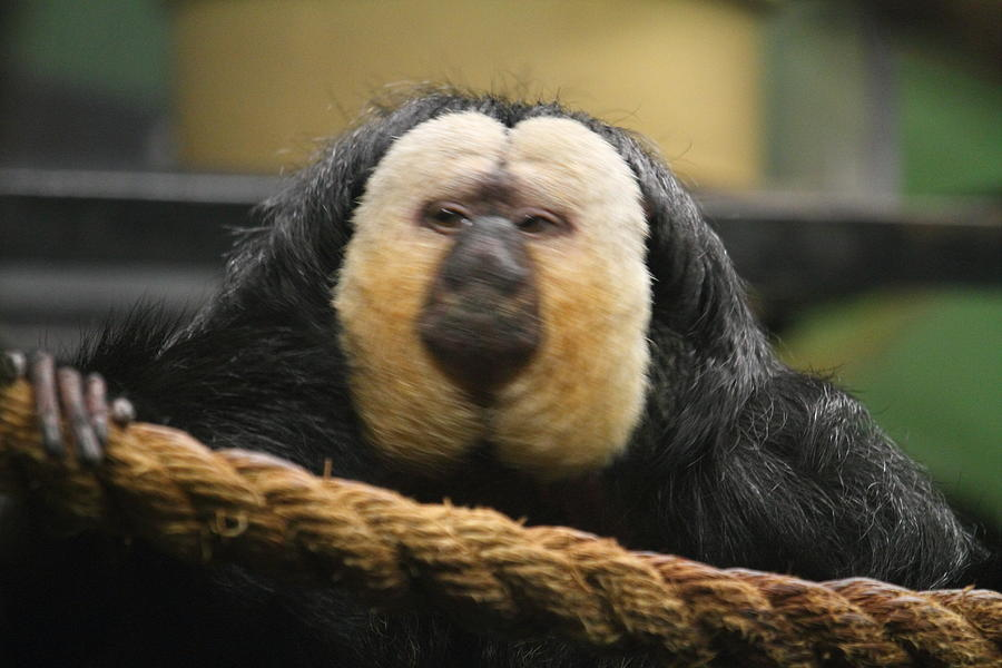 National Photograph - National Zoo - Mammal - 01136 by DC Photographer