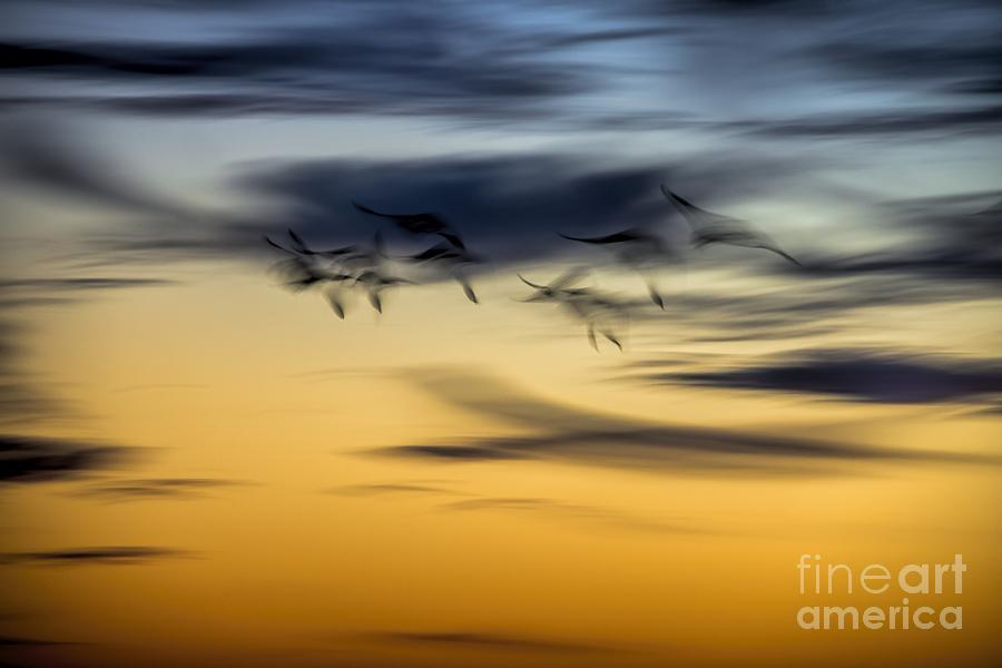 Sky Photograph - Natural Abstract Art by Peggy Hughes