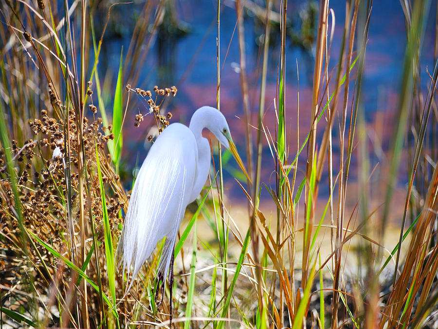 White Heron Photograph - Natural Beauty by Adele Moscaritolo