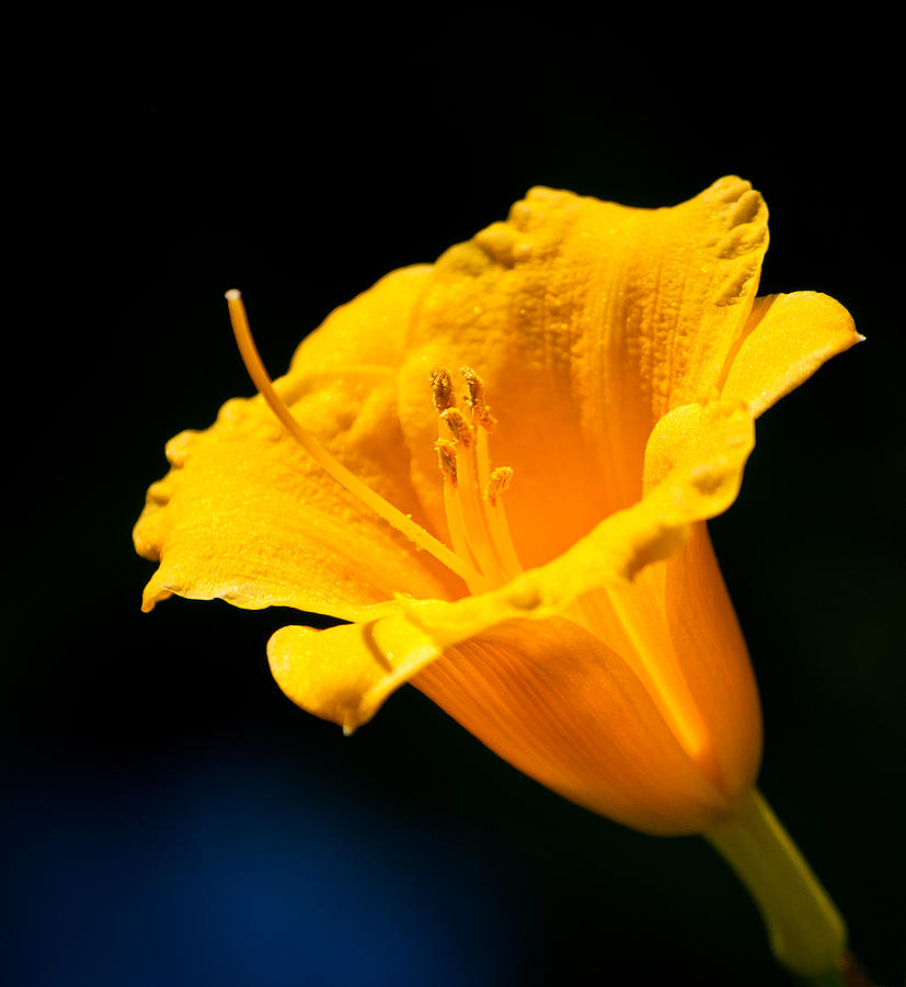 Flower Photograph - Natural Beauty by Lee Costa