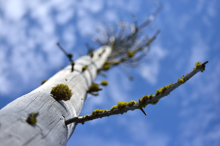 Dead Tree Photograph - Natural Bonsai by Rich Rauenzahn