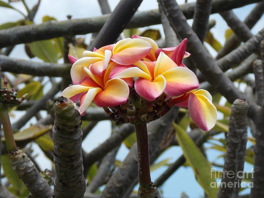 Hawaii Photograph - Natural Bouquet  by Mindy Sue Werth