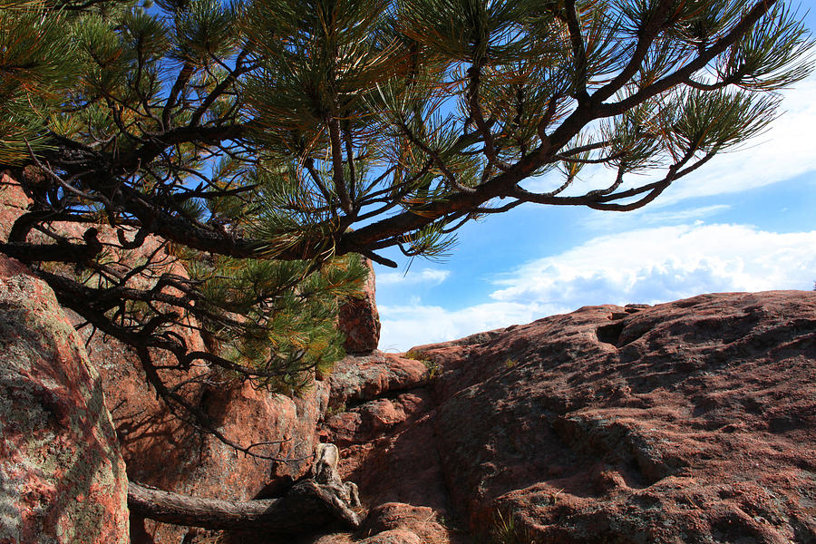Royal Gorge Photograph - Natural Delights by Mike Flynn
