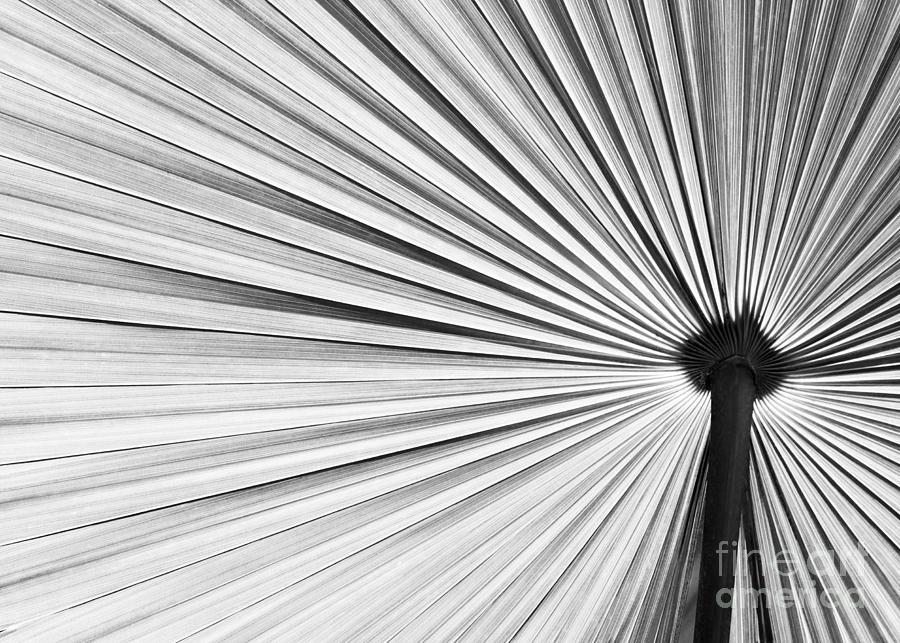 Fall Photograph - Natural Expolsion by Sabrina L Ryan