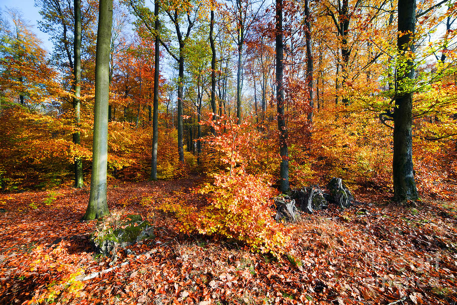 Natural Forest In Autumn Photograph