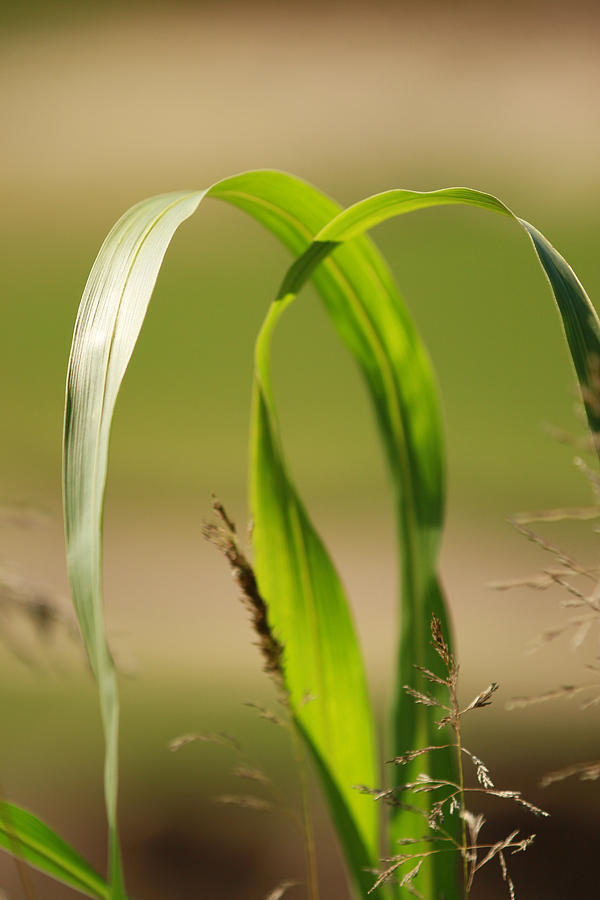 Nature Photograph - Natural Grass by Tinjoe Mbugus