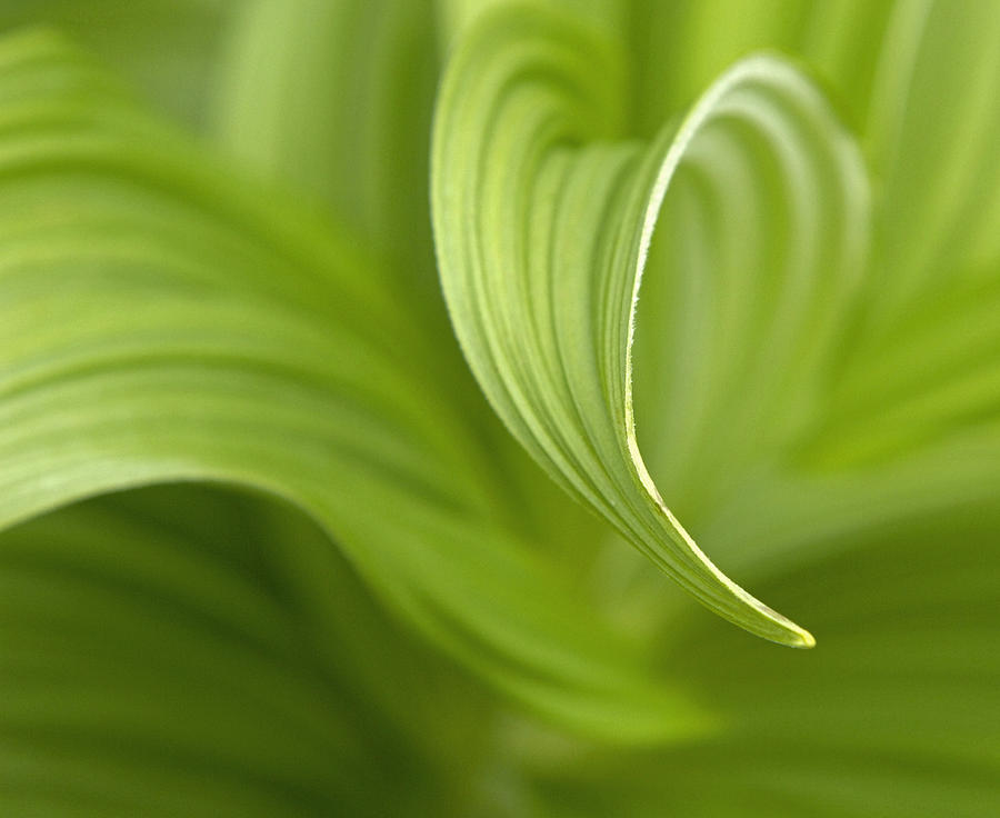Nature Photograph - Natural Green Curves by Claudio Bacinello