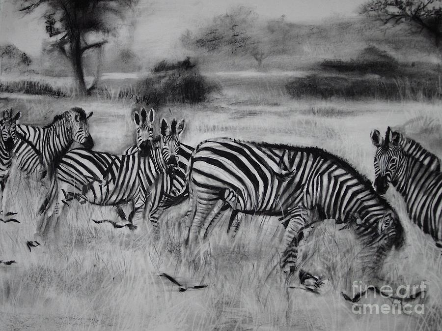 Zebras Drawing - Natural Habitat  by Laneea Tolley