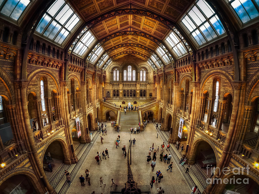 Natural History Museum - Central Hall Photograph by Mark Carnaby
