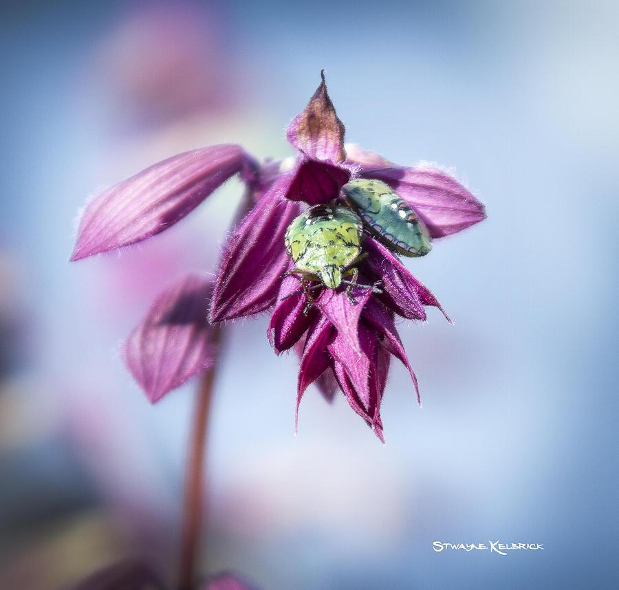 Nature Photograph - Natural Bug Life by Stwayne Keubrick
