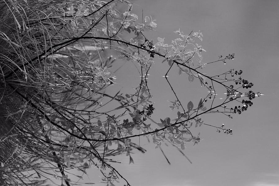 Reflection Photograph - Natural Reflection by Karol Livote
