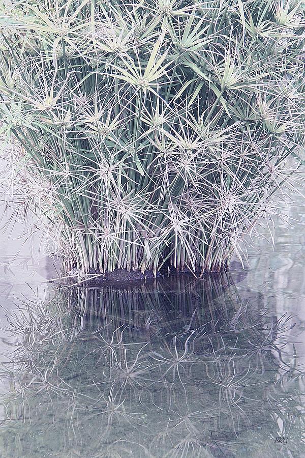 Grass Photograph - Natural Reflections by Ben and Raisa Gertsberg