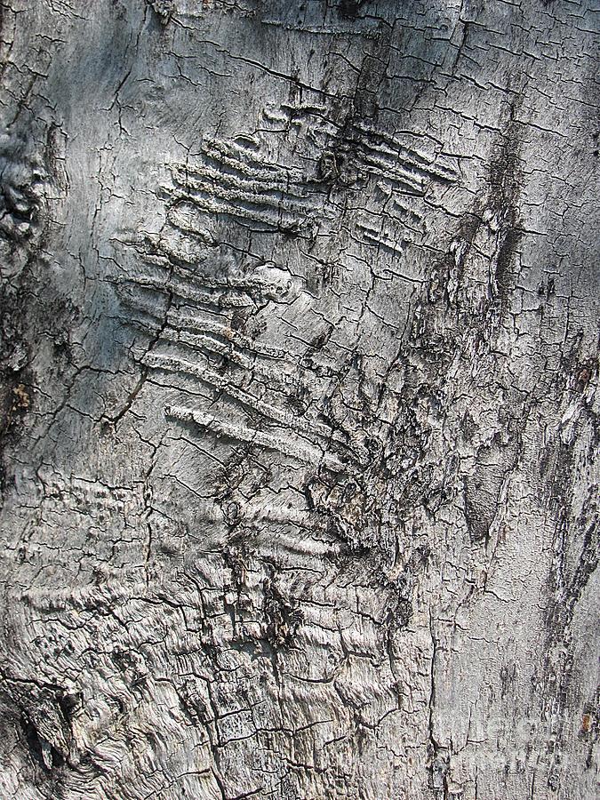 Tree Photograph - Natural Texture_1 by Halyna  Yarova