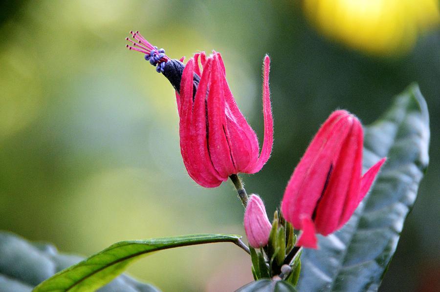 Floral Photograph - Natural Wonder 2 by David Earl Johnson