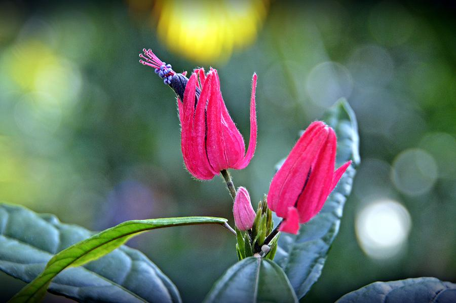Flowers Photograph - Natural Wonder by David Earl Johnson