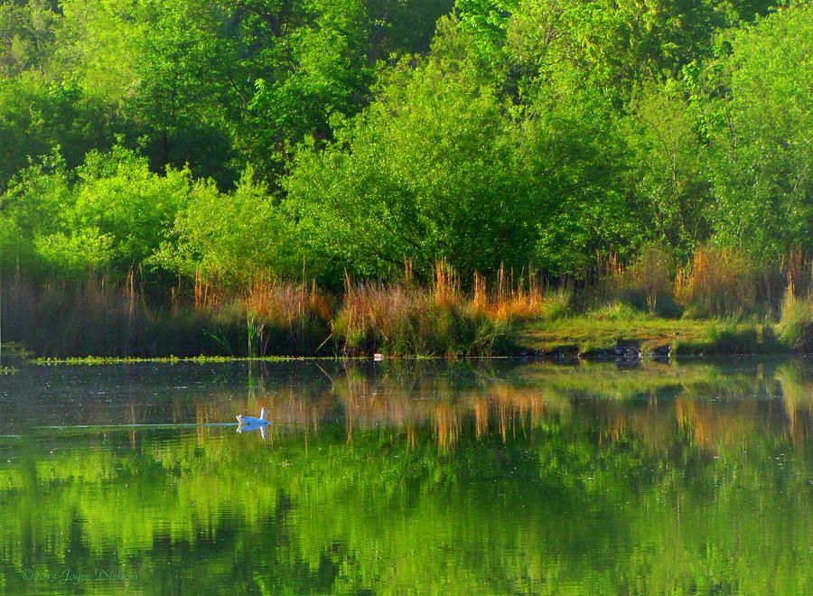 Pond Photograph - Naturally Reflected by Joyce Dickens