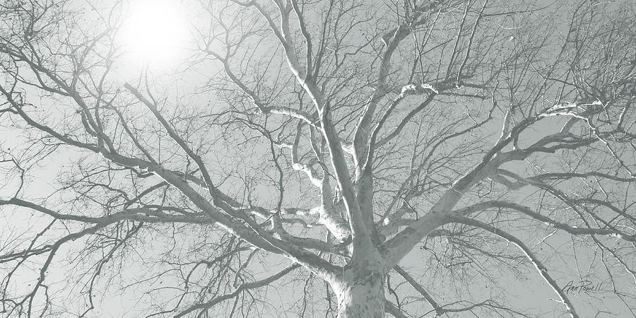 Tree Photograph - nature - art - Winter Sun  by Ann Powell