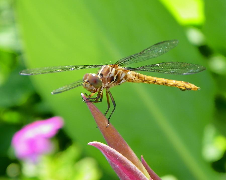 Bug Photograph - Nature by Carolyn Bistline