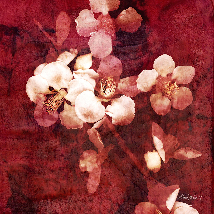 Blossom Digital Art - Nature Flowers Blossom Time  by Ann Powell