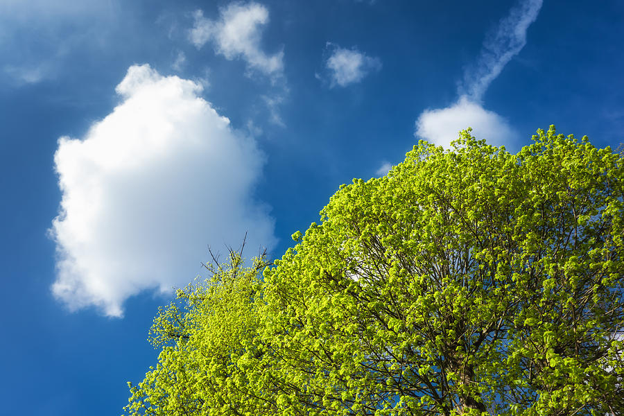 Spring Photograph - Nature In Spring - Bright Green Tree And Blue Sky by Matthias Hauser