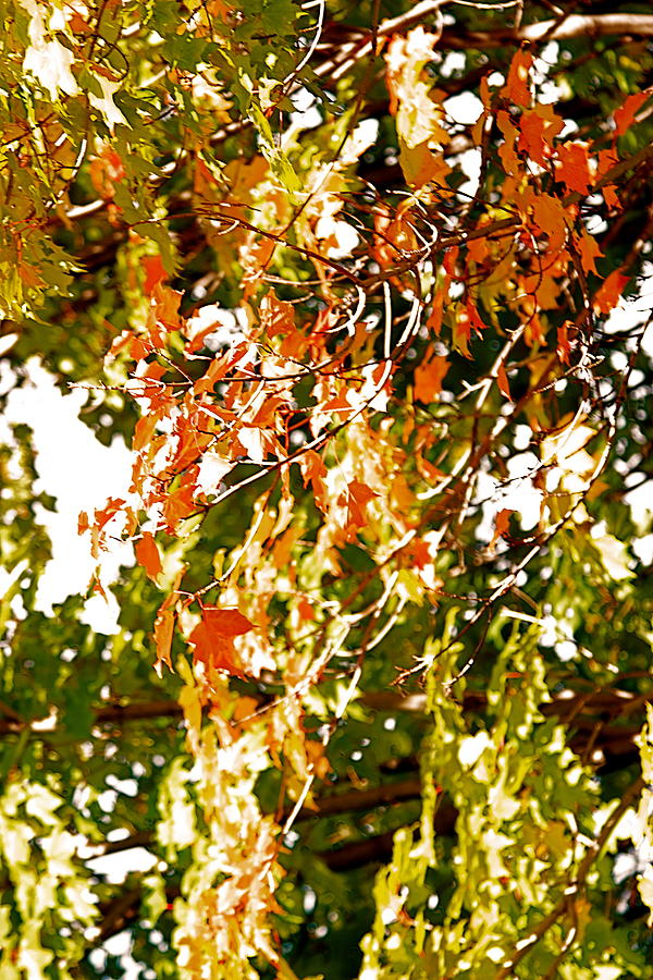 Tree Photograph - Nature In The City by Jocelyne Choquette
