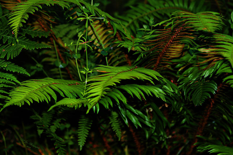 Capitol Forest Photograph - Nature In The Pacific Nw by Jeanette C Landstrom