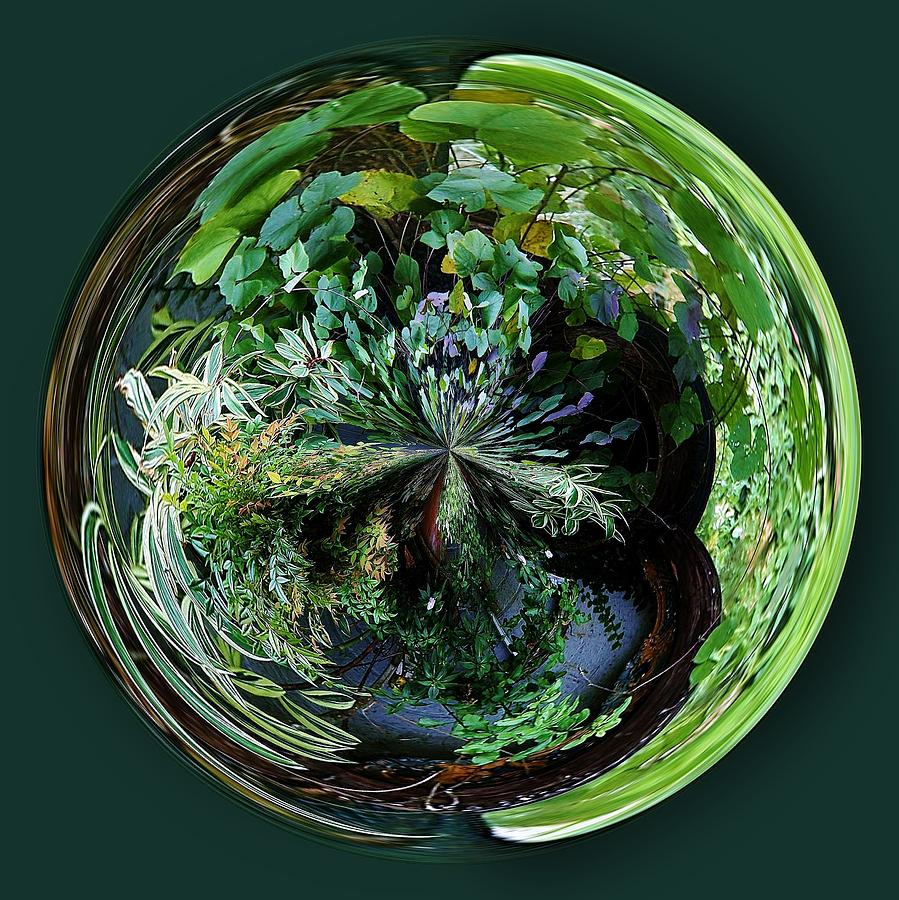 Nature Photograph - Nature Orb by Paulette Thomas