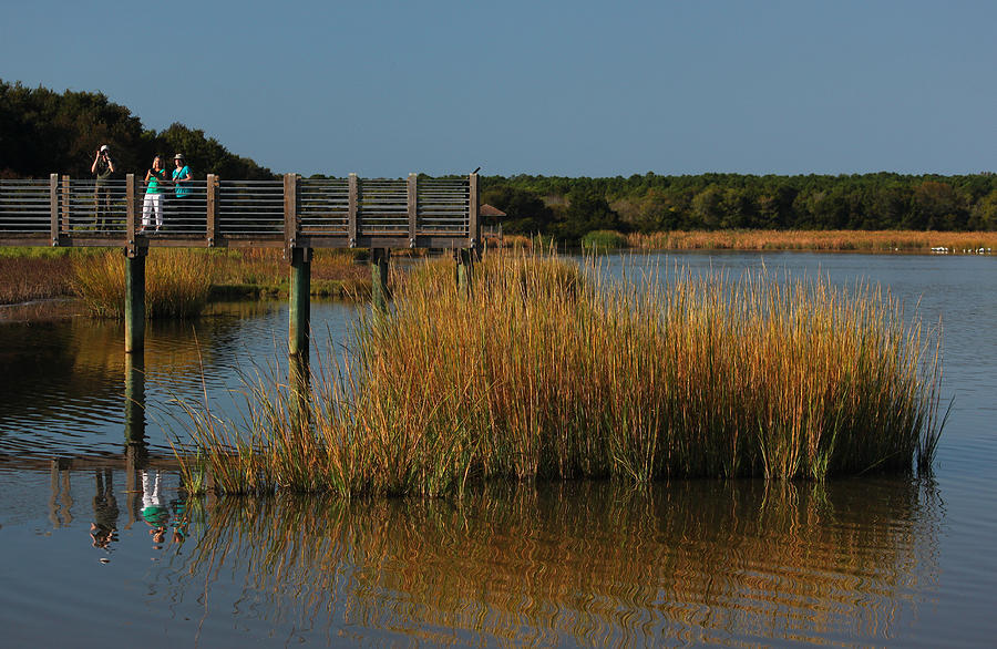 Marsh Photograph - Nature Paparazzi by Suzanne Gaff