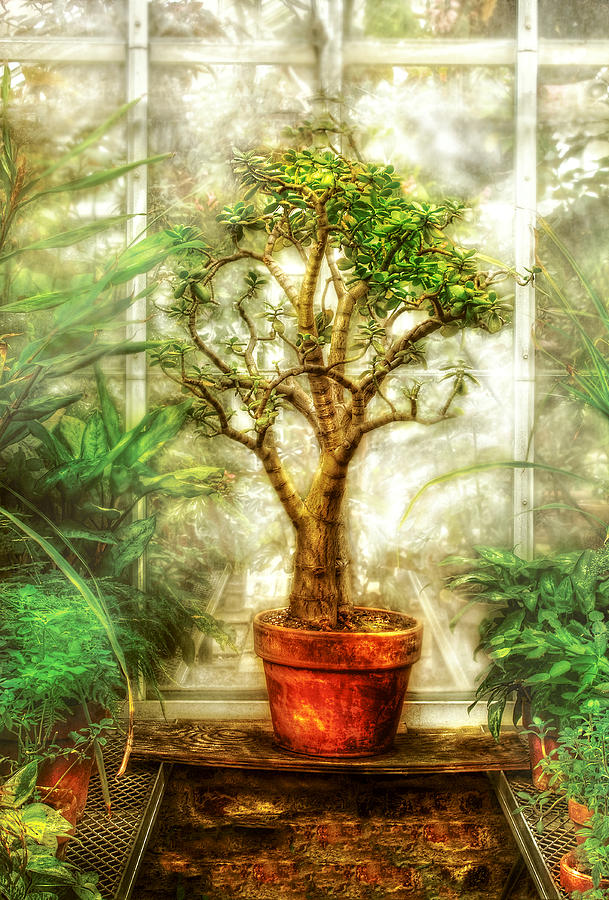 Tree Photograph - Nature - Plant - Tree Of Life  by Mike Savad