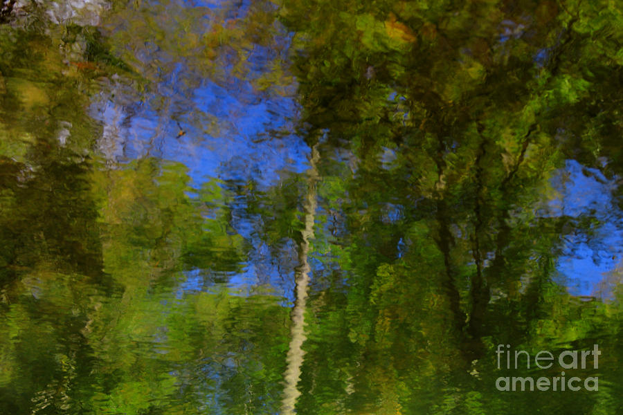 Nature Photograph - Nature Reflecting by Melissa Petrey