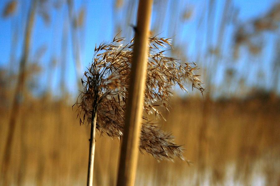 Photograph - Nature Series 1.1 by Derya  Aktas